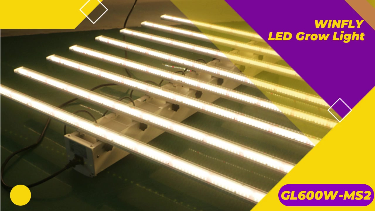 Best Professional WINFLY Plant Grow LED Lights 600W manufacturers GL600W-MS2 FactoryPrice-ShenzhenWinflyNewMaterialCo., LTD.