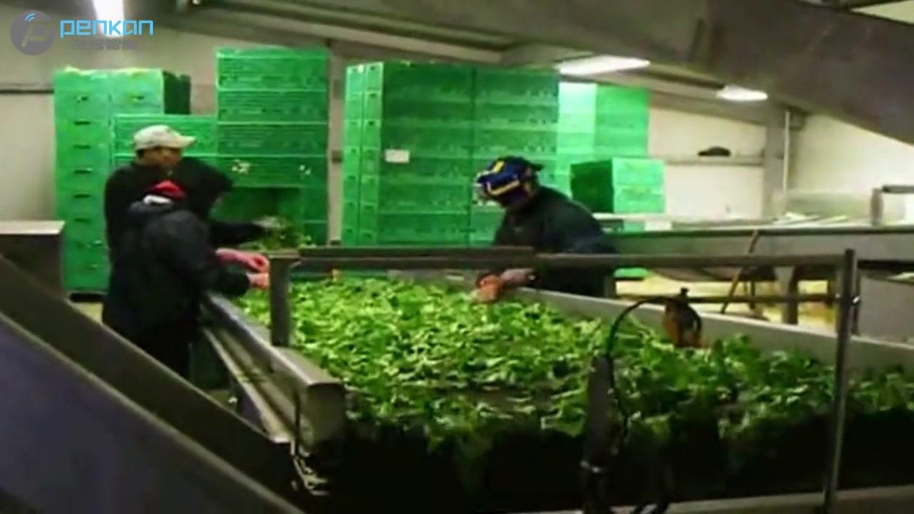 Video mesin kemasan salad