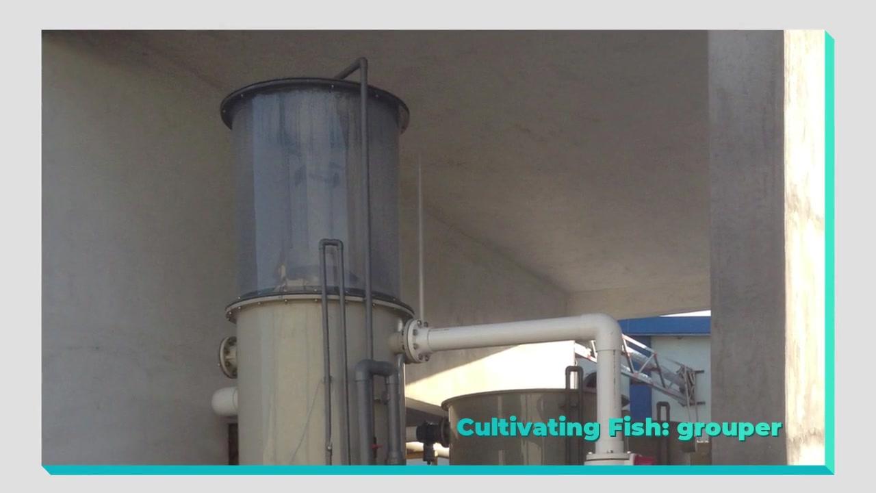 8000m³ Volume de água fechado Fazenda de peixes de alta densidade interior