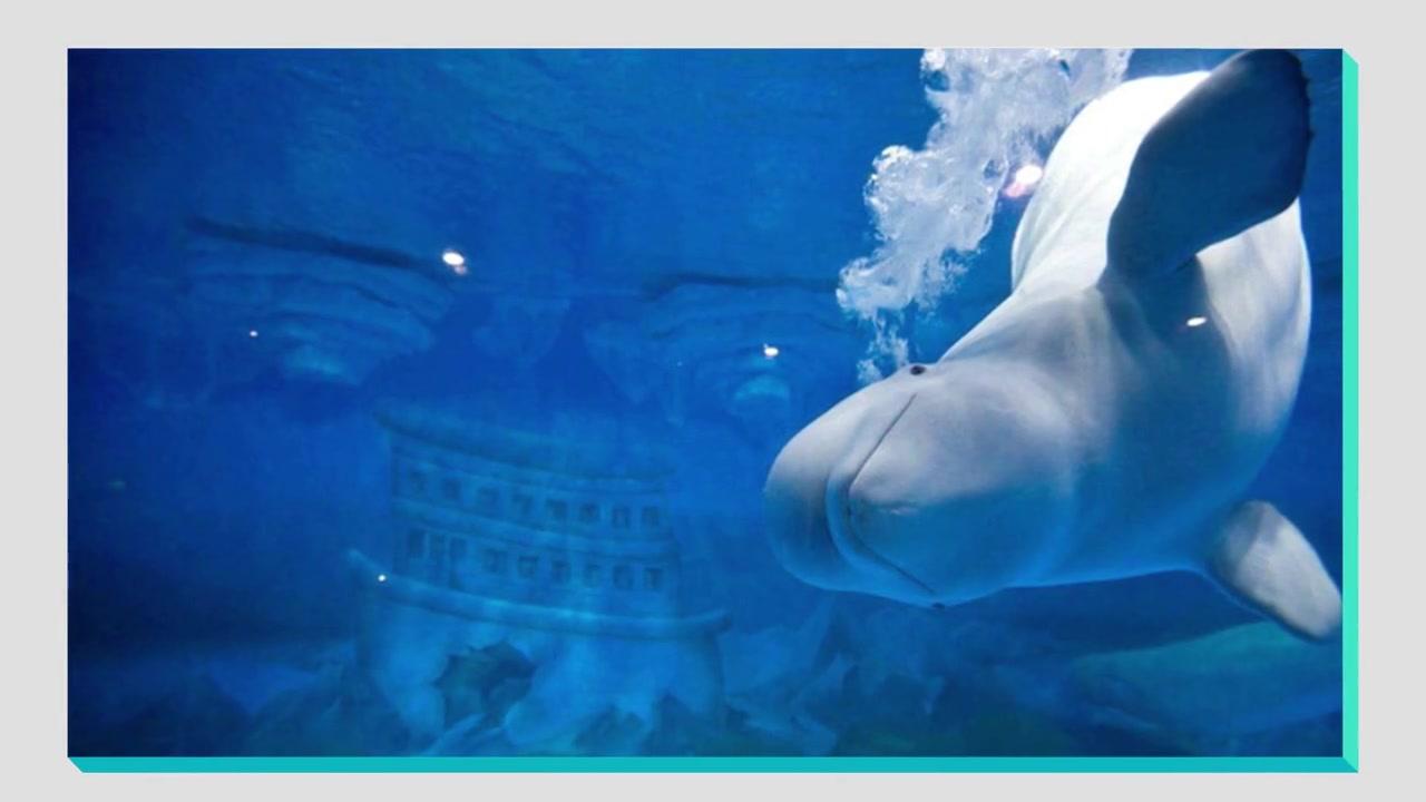 Deco Aquarium Life Support System (DecoFacc) für Dalian Sun Asia Ocean Park