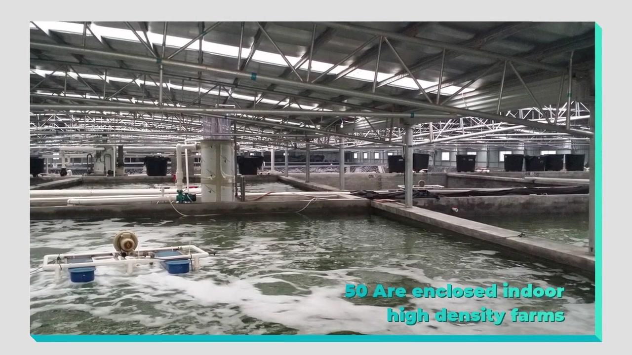 Профессиональный поставщик RAS для Grobest (Guangdong) Marine Aquaculture Co., Ltd