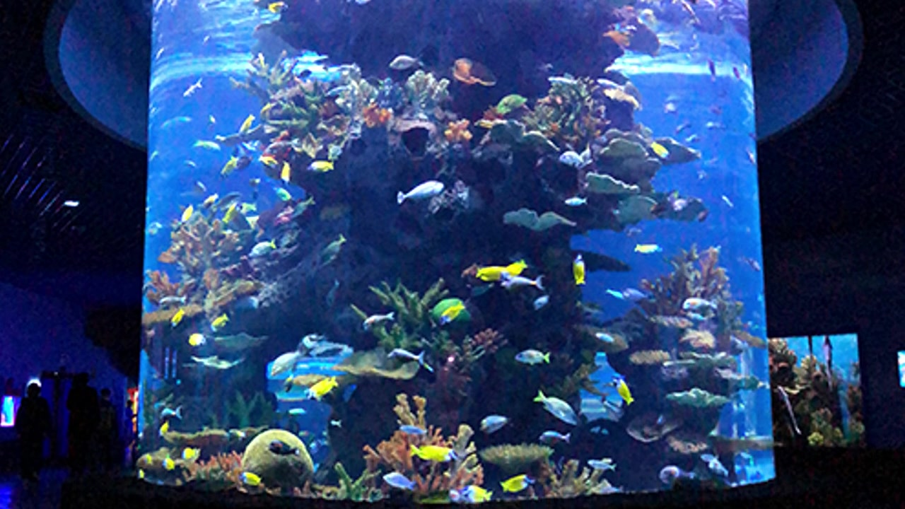 Customized Acrylic fish tank and cylinder tank manufacturers From China