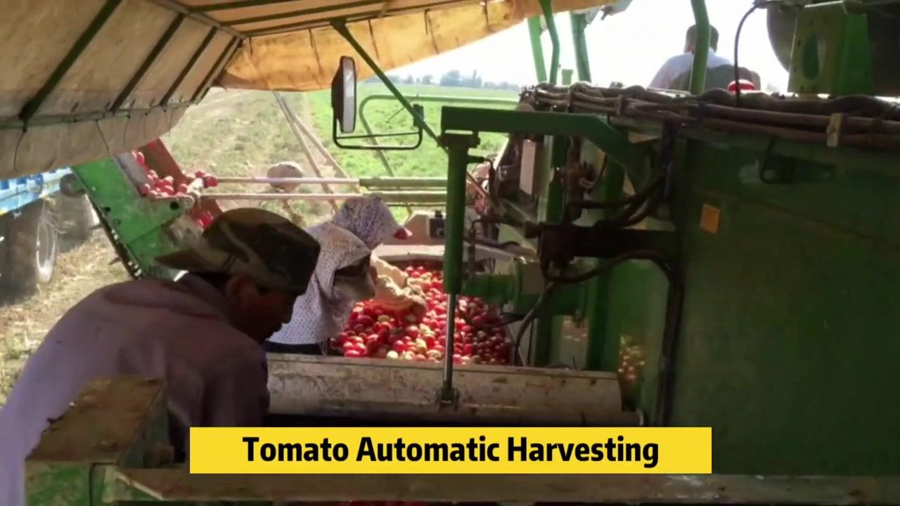 China Línea de procesamiento de tomate Fabricantes - Chase